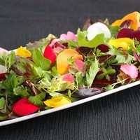Салат из первоцвета