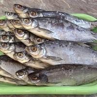 Заготовки из рыбы на зиму