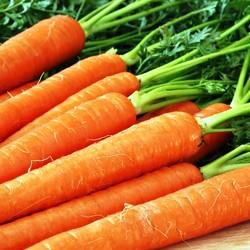 Морковь рецепты, морковные блюда вкусно и просто